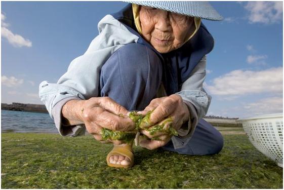 Okinawa, l'île des centenaires en bonne santé