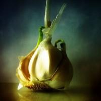 L'ail – Boostez votre santé et vos plats grâce aux épices