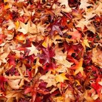 L'automne et moi : 7 conseils pour bien vivre la saison