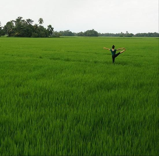 La verte culture du riz au Kerala