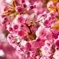 Un grand nettoyage de printemps dans votre assiette!