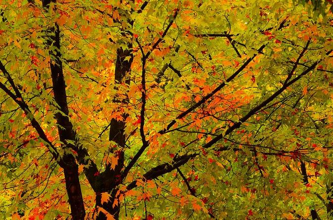 arbre vert rouge jaune